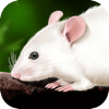 Rat Dissection – No Rodents Were Harmed During The Writing Of This Review