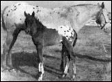 Bluebird B F-1687 and foal