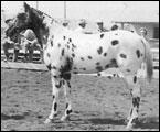 Cojo Mapachi F-1813