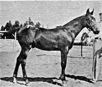 Simcoe's Koosah F-1851