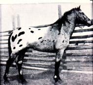 Zebra Dun F-1344