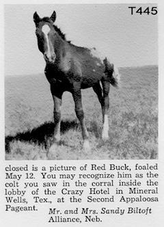 redbuck