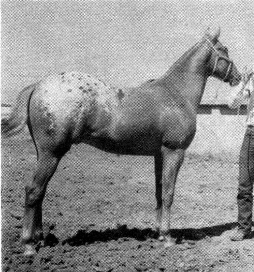 chieftewa1753
