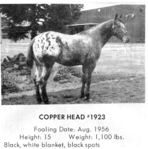 copperheadt1923d