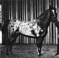 generalcuster1986a