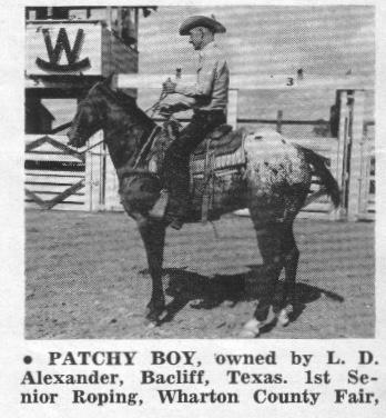 patchyboyt2185