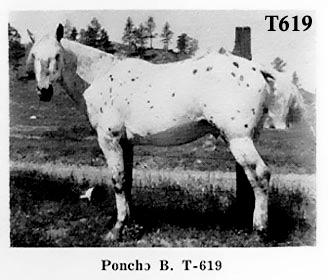 ponchobt619