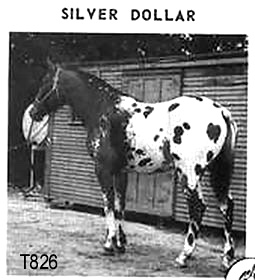silverdollart826