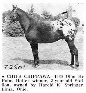 chipschipawat2501
