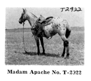 madamapachet2922