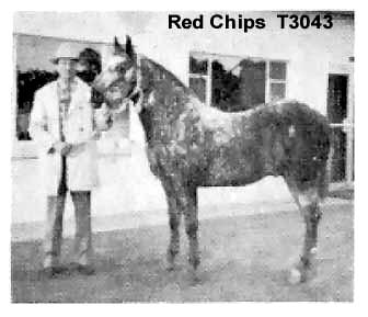 redchipst3043