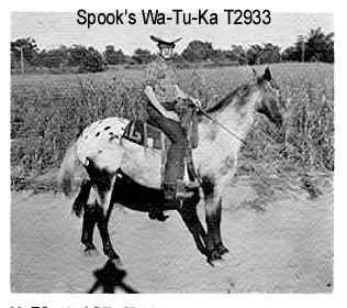 spookswatukat2933