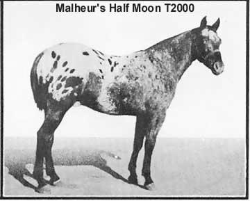 malheurshalfmoont2000d