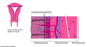 Uterine Fibroids;Symptoms,Causes of this Female Reproductive Disease.