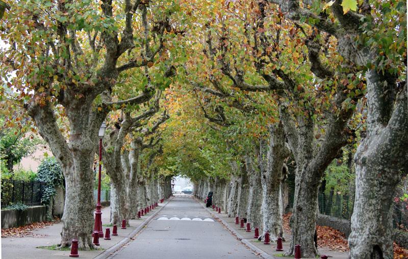 Viviers couleurs automne gite montelimar drome
