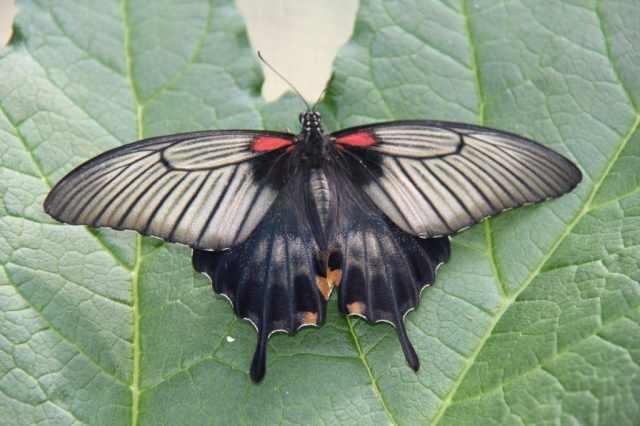 ferme papillons die drome