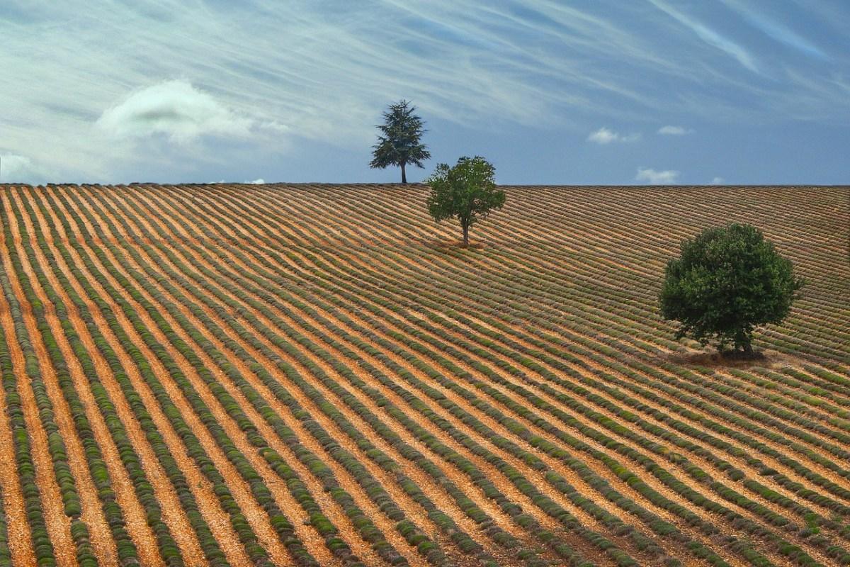 Drôme provençale : une histoire, des visites, une richesse qui gagnent à être connue