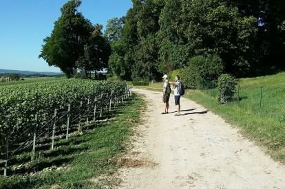 Vineyards of Veuve Cliquot