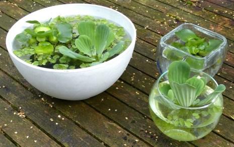 De minivijver voor op tafel en de plantjes die over zijn.