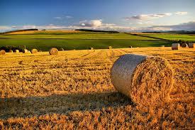 Analisi e proposte del FSI: agricoltura e settori industriali strategici