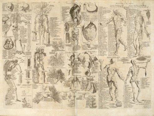 Anatomisk kart