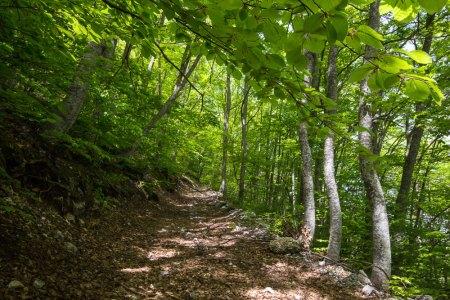 pista forestale