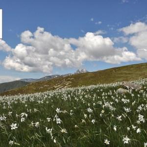 Appennino Ecosistema firma l'Appello per la natura d'Italia