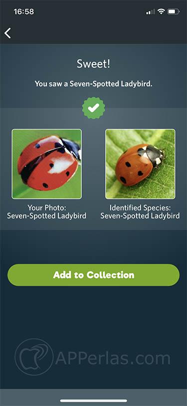 descubrir especies Seek by inaturalist 1