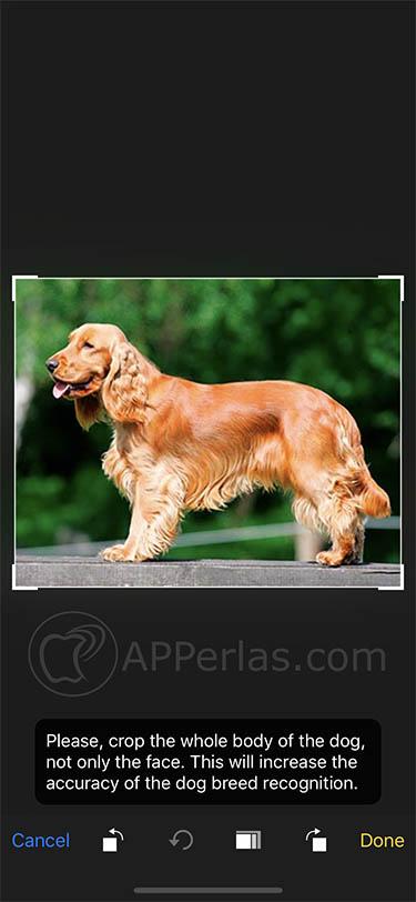 app para identificar perros dogzam 2
