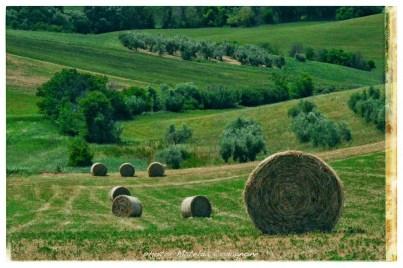 §02 landscape_grande_quercia_matelda_codagnone