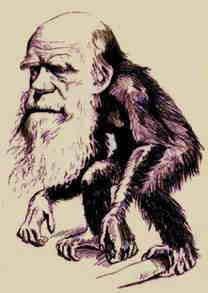 stammen wij van de apen af??