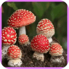Mushroom Wallpapers and Backgrounds