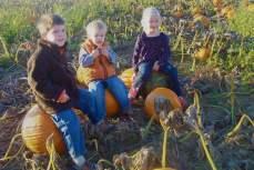 pumpkin camaraderie