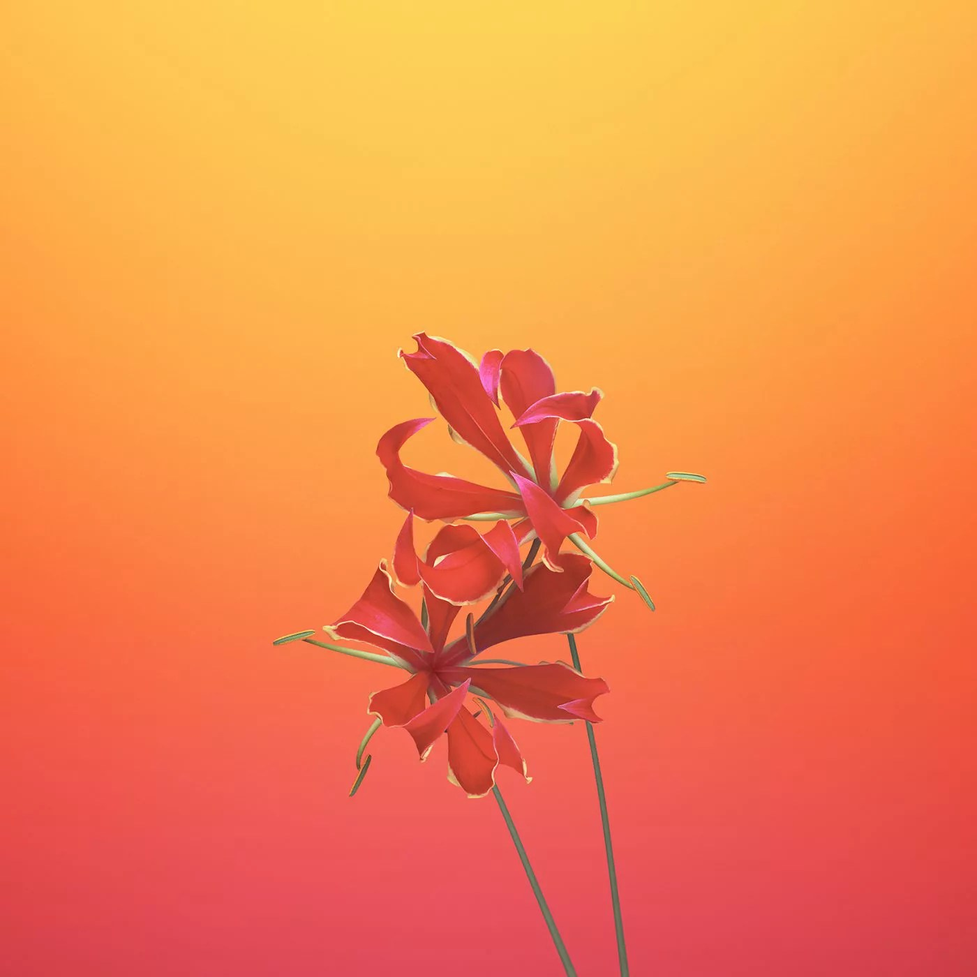 ios_11_gm_wallpaper_flower_gloriosa.jpg