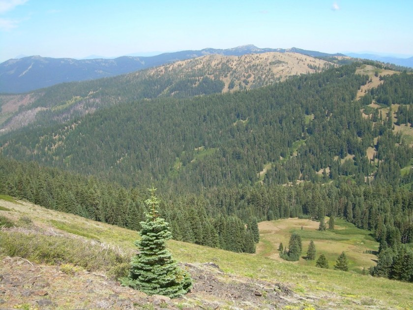 The Siskiyou Crest is: Where the Wild Things Are. Let's keep it that way!