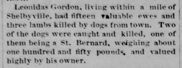 Leonidas Gordon sheep killed by dogs, 1885
