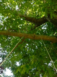 Swinging under the canopy of a large maple tree in the front yard, made this old lady feel like a kid again...