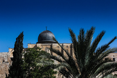 Israel palm trees and mosque