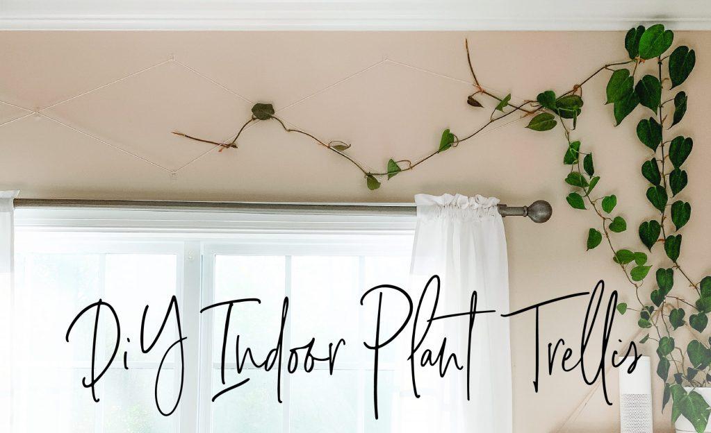 DIY Indoor Plant Trellis | Care for Your Indoor Vine Plant