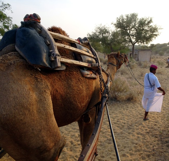 indien reise camel cart ride