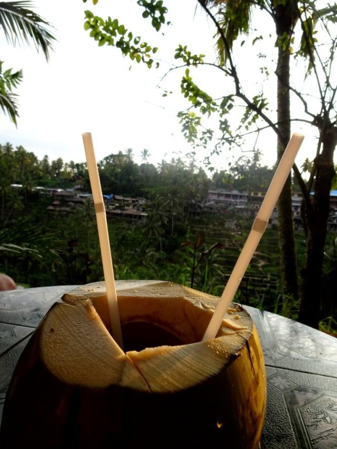 ubud tegallalang coconut