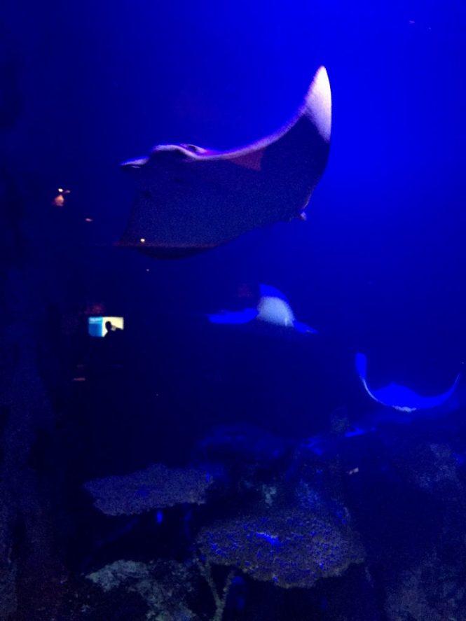 las-vegas-foto-diary-shark-reef-mandalay-bay