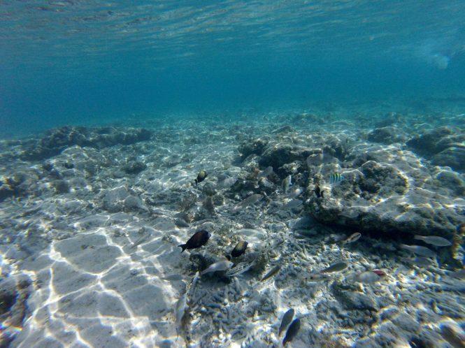 gili trawangan turtle spot snorkeling