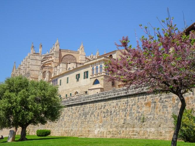 palma de mallorca kathedrale mit bäumen