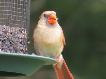 Cardinal USA