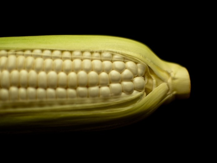 Summer White Corn