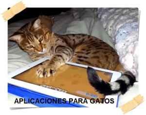aplicaciones para gatos