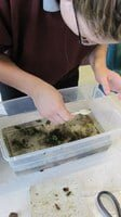 Students at the Oregon Youth Authority's Oak Creek Facility collect insects from creek samples