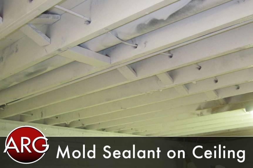Basement Mold After