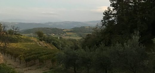 Wine Tasting in Tuscany Bellaria